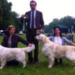 CH Infinity Jambo-ree Wild Rose BOB Int. Show Special Golden