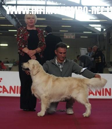 CAC club show Cesena 04.11.2012