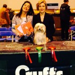Lolli - Marybel Cream Mou - Crufts